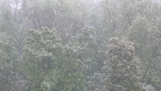 Slow motion footage of heavy snow falling in spring...