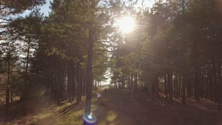 Aerial footage in the woods, the camera is going vertically up, sun flares visible due to the branches of the tree at the front...
