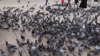 Sarajevo, Bosnia and Herzegovina, 3rd, August 2017 - Slow motion footage of the old town and Sarajevos and a girl scares the pigeons and they fly away...