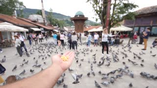 Sarajevo, Bosnia and Herzegovina, 3rd, August 2017 - Slow motion footage of two pigeons eating from a mans hand in Sarajevos old town