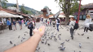 Sarajevo, Bosnia and Herzegovina, 3rd, August 2017 - Slow motion footage of two pigeons eating from a mans hand in Sarajevos old town near the landmark Sebilj...