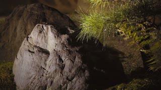 Japanese dry-landscape rock garden in Kyoto, Japan at night