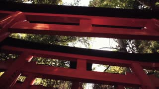 Looking up at the famous orange gates at Fushimi Inari Shinto shrine in Kyoto,