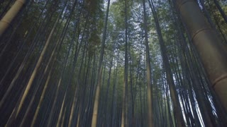 Moving through a bamboo forest in Matsuyama, Japan at Sunset