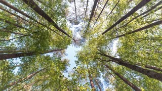 Rotating timelapse of the canopy of a forest in North Carolina