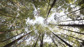 Rotating view of the canopy of a forest in North Carolina