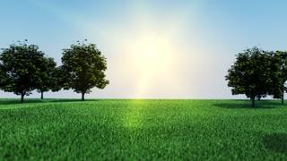 Camera Zoom Through Sunny Meadow