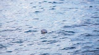 Alone bottle in sea water. Wavy seascape with empty white bottle floating.