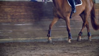Brown Horse Running in Riding Hall Close Up Slow Motion