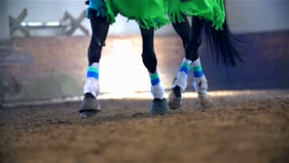 Colorful Horse Running in Slow Motion