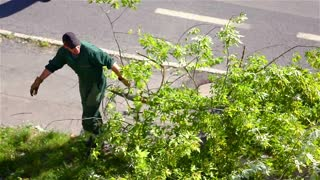 Cutting Trees 03 Hd