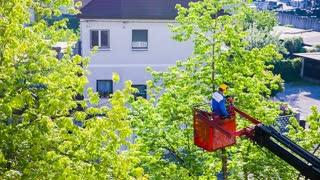 Cutting Trees 04 Hd