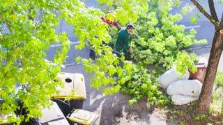 Cutting Trees 06 Hd