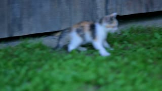 Energetic little cat outside. Baby cat jumping around.