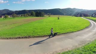 Flying behind young boy and black dog walking on road. Slow motion aerial shot at sunset of person walking dog outside in sunny weather on road with green field around.