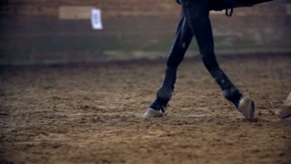 Horse Galloping in Slow Motion