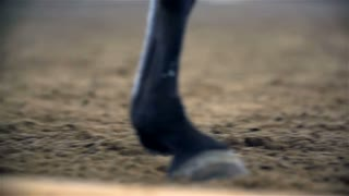 Horse Hooves Close Up Slow Motion