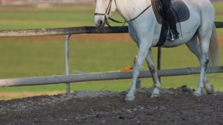 Horse hooves stepping in mud. White Lipizzan walking around inside the fence in nature person riding.