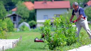 Man Having Trouble Cutting Lawn Around Bushes