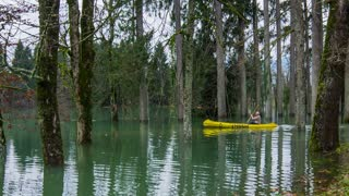 Person in kayak rowing through flooded forest. Wide shot of male in yellow boat rowing through forest deep flooded in water.