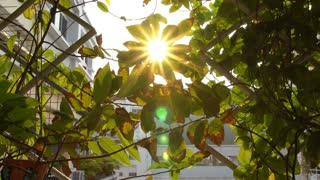 4K ,Sun beaming between the leaves in city garden.