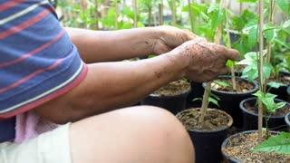 Asian senior farming working in vegetable garden in summer