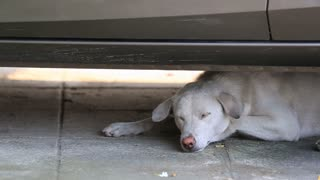 close up shot of a tired and sleepy under the car