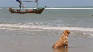 Dog sitting and enjoying seascape on a beach