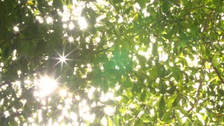 Nature background. Beautiful Sun shine through the blowing on green leaves. Blurred abstract bokeh with sun flare. Sunlight. Sunflare.