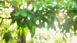 Nature green bokeh with Flare Shot on SONY A6300 in 4K UHD.