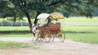 Non identify in horse-drawn carriage drive in farm
