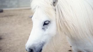 White Horse Close-Up