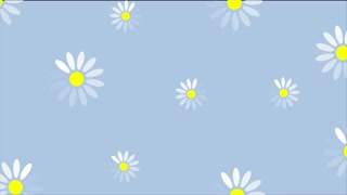 Summer camomiles flowers graphic motion design. Seamless loopable. Video animation Ultra HD 4K 3840x2160