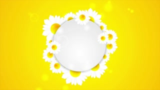 Summer motion graphic design with camomiles and blank circle label. Video animation Ultra HD 4K 3840x2160