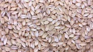 Pearl Barley As Background