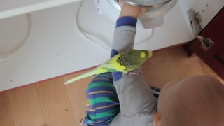 a baby boy playing with his pet parakeet in kitchen