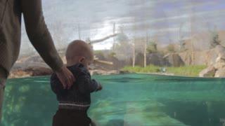 a baby boy watching a polar bear swim