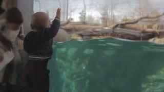 a baby watching polar bear swimming slow motion