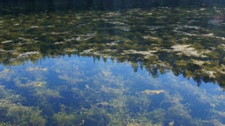 A beautiful mountain lake with tons of flies and bugs and moss