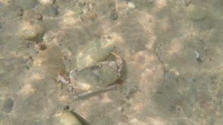 A beautiful sea crab walking along ocean sandy floor