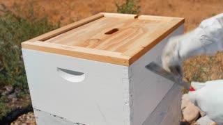 A beekeeper smokes his hive and checks his bees