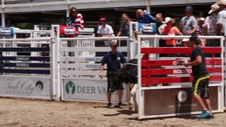 a boy calf riding at childrens rodeo