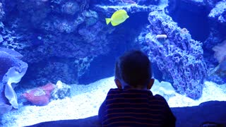 A boy watches the tropical fish swimming in aquarium