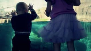 a boy watching polar bear swimming slow motion