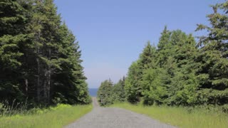 a dirt road surrounded by trees with the ocean at the end