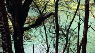 a forest lake in jiuzhaigou valley national park in china dolly shot