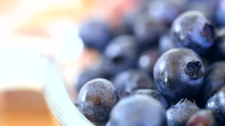 A fresh picked basket of wild blueberry dolly shot