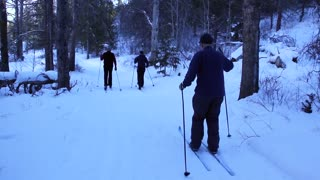 a group cross country skiing in forrest