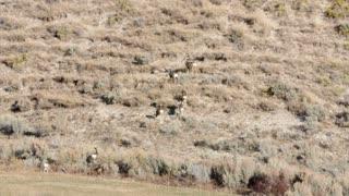 A herd of deer on mountain