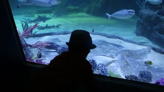 a little boy looking at fish in the large aquarium